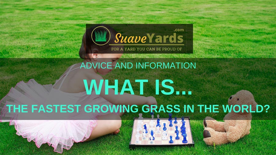 What is the fastest growing grass in the world
