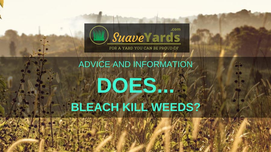 Does bleach kill weeds header