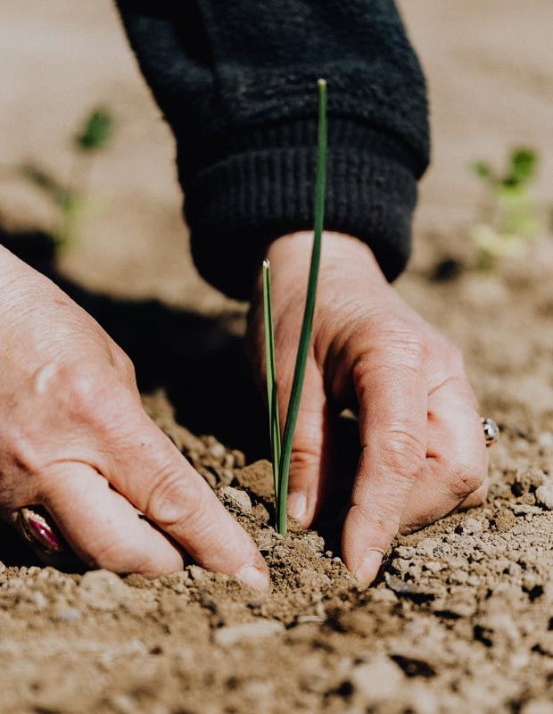 MAn planting seed in hard dirt
