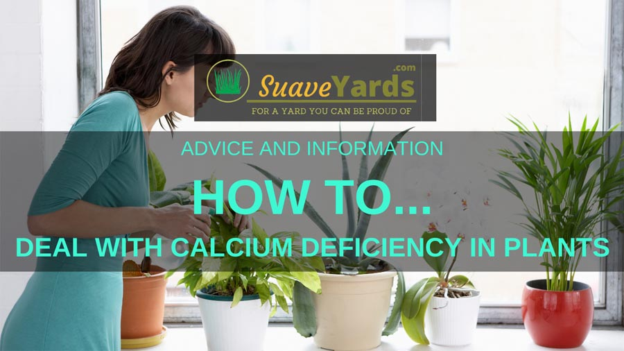 How to deal with calcium deficiency in plants