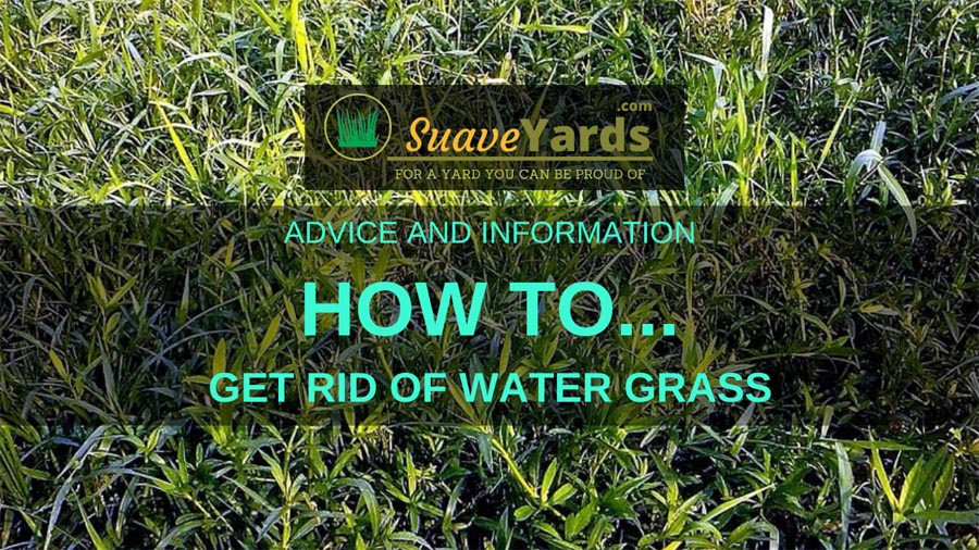 How to get rid of watergrass