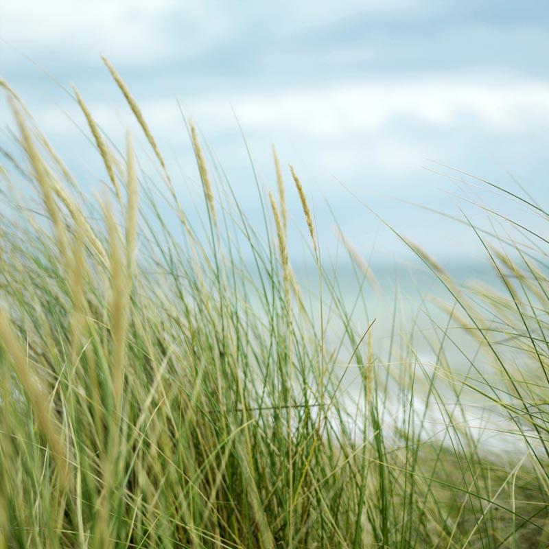 Weeds at beach