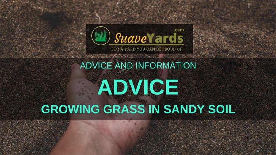 Growing Grass in Sandy Soil