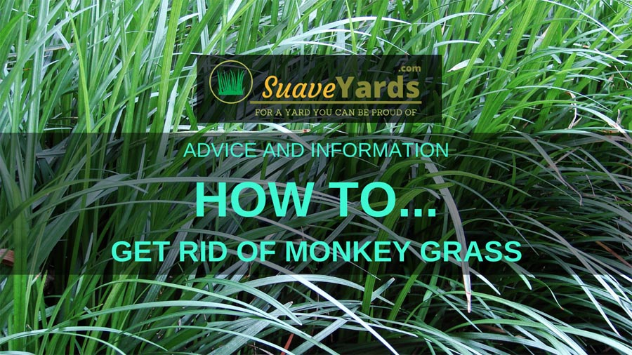 How to get rid of monkey grass header