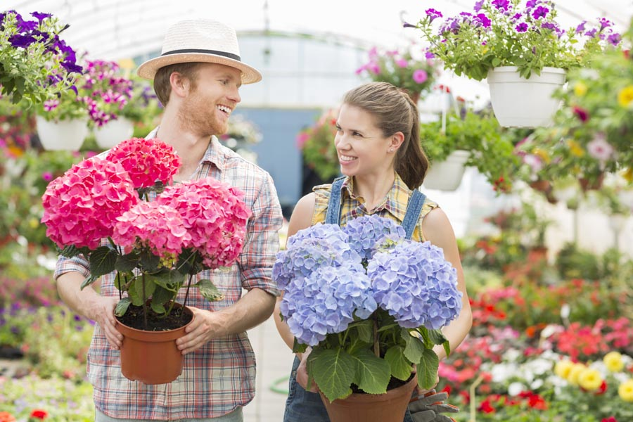 Happy gardeners looking at each other while holding flower pots at greenhouse