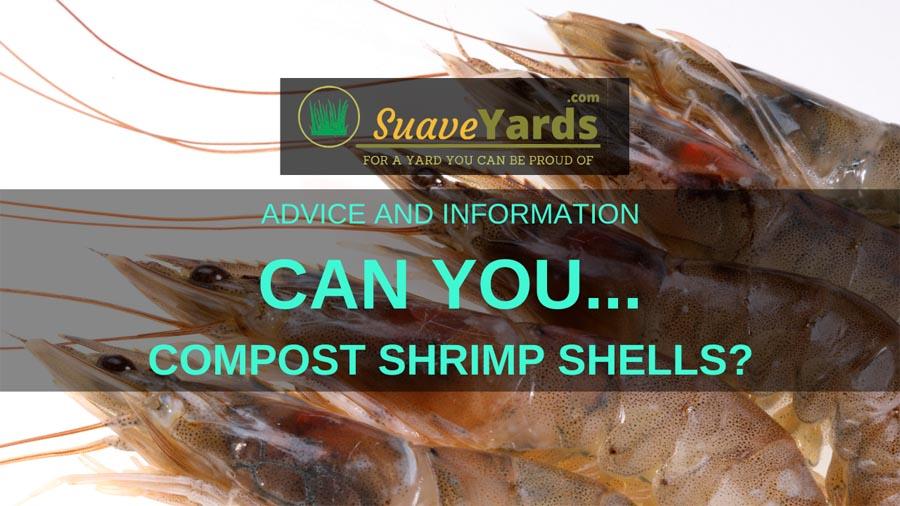 Can you compost shrimp shells small