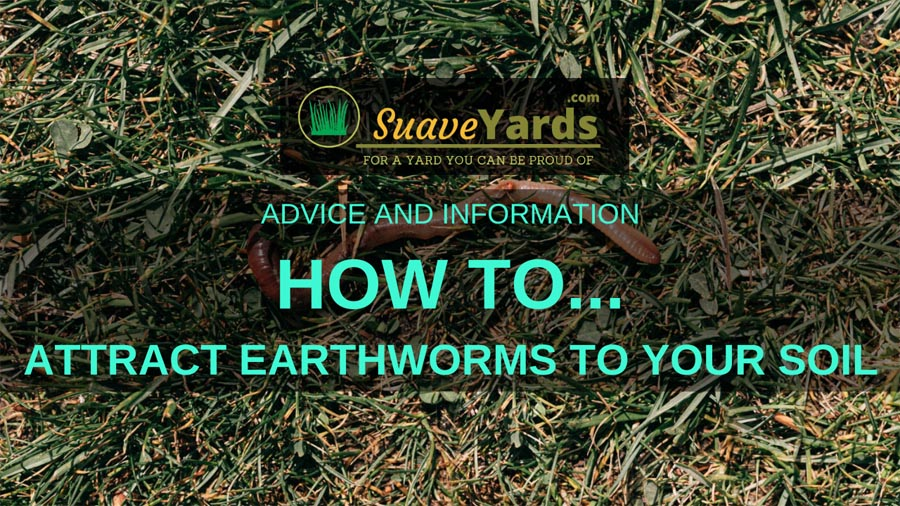 How to attract earthworms