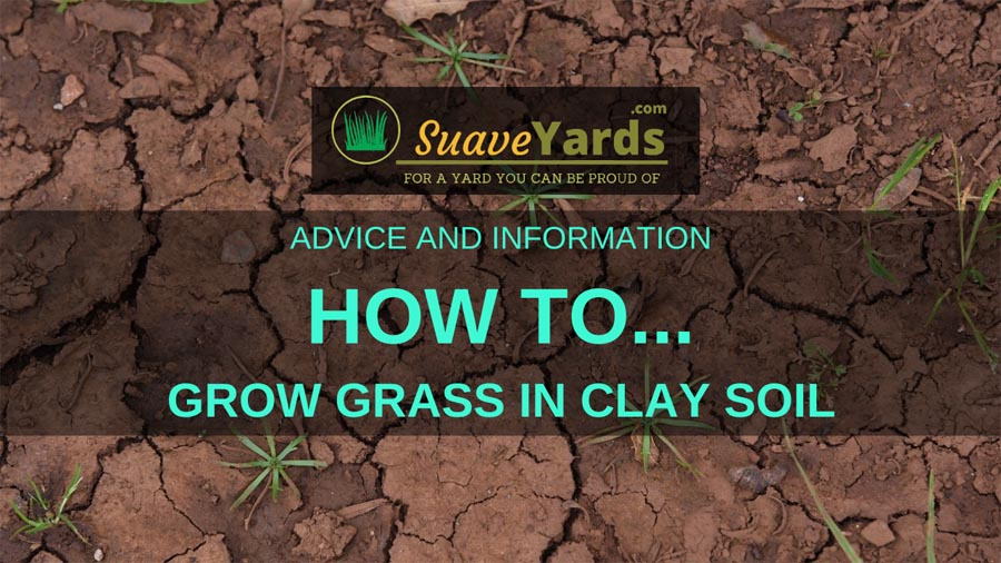 How to grow grass in clay soil