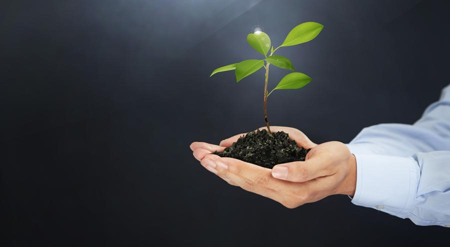 Person holding plant in soil in hands