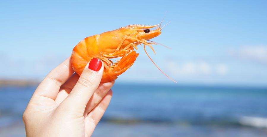 Man holding shrimp