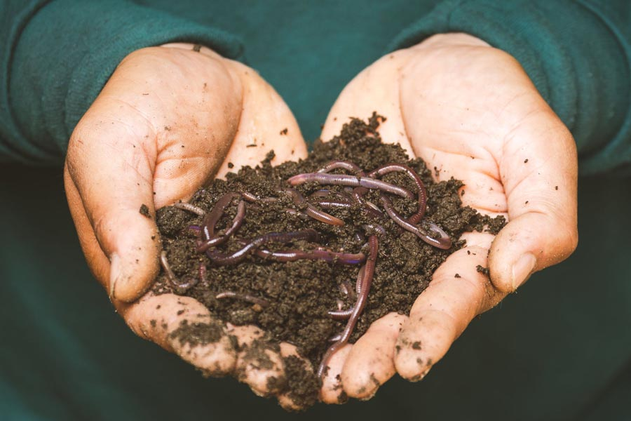 Man holding soil with worms in it