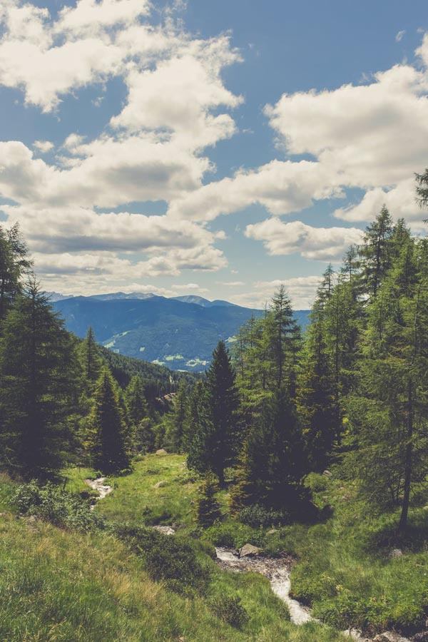 Conifer trees in scenic landscape