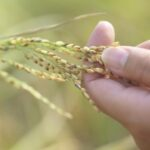 Close up of hand holding grass