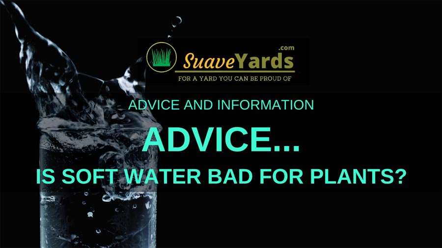 Is soft water bad for plants small